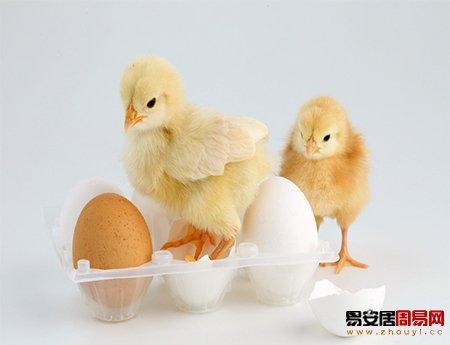 属鸡和什么属相相冲