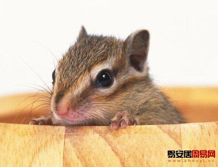 属鼠人的性格特点