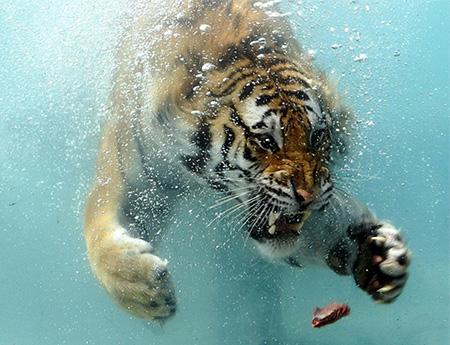 属虎的和什么属相最配