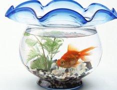鱼缸摆放位置风水图