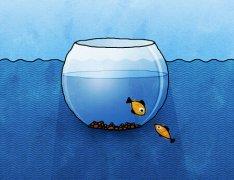 鱼缸的颜色风水
