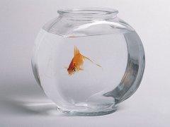 鱼缸摆放的风水禁忌