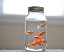 家居风水鱼缸摆放如何能旺财