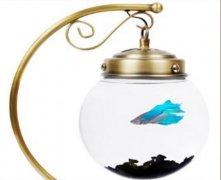 揭秘鱼缸的正确摆设风水