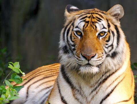 属虎2020年运势及运程 2020年属虎人的全年运势