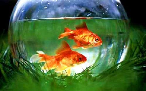 办公室鱼缸摆放位置风水,鱼缸怎么摆放最招财旺事业