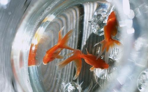 客厅鱼缸摆放位置风水,这样摆放最不利家居招财旺运