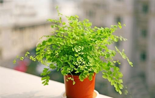 卫生间摆放什么植物风水最好,植物摆放有什么风水讲究