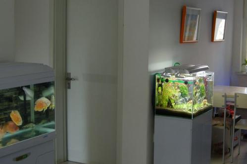 鱼缸对门摆放好吗,有什么危害
