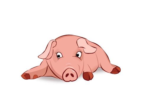 属猪人2019年1月份运势