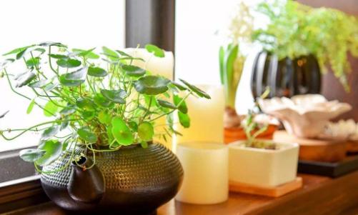 八种植物招财又旺宅,还能挡煞除霉运