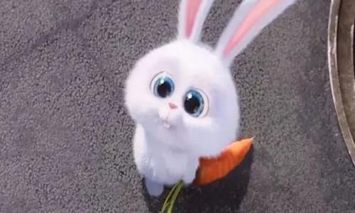 75年男命属兔出生最好的月份,四月六月七月十月