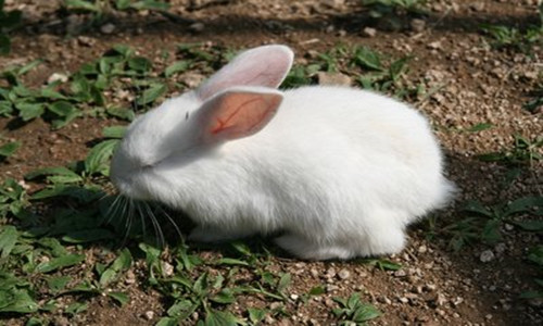 75年女命属兔出生最好的月份,二月三月七月八月