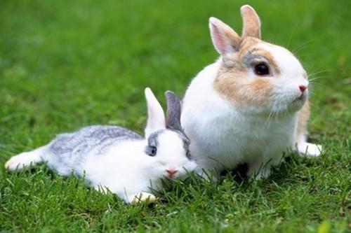 属兔人哪一年桃花运最旺盛,会遇良人吗