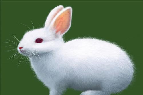 最旺属兔人的是哪个属相,贵人属相是哪些