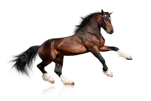 属马和什么生肖相冲相克,属鼠属牛属兔