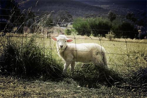 属羊人的灾难年龄,23岁39岁48岁