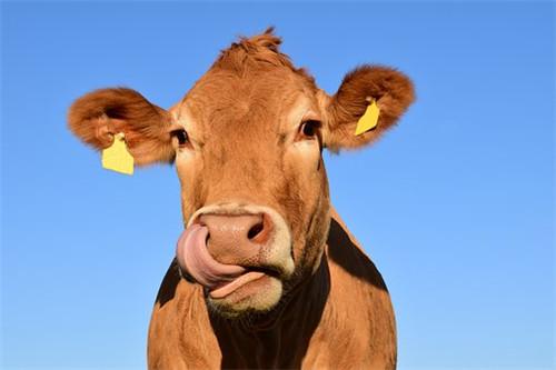 属牛2020年的财运贵人,生肖鼠生肖蛇生肖鸡