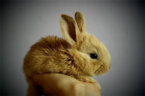水命属兔什么月份出生好命,三月五月和八月