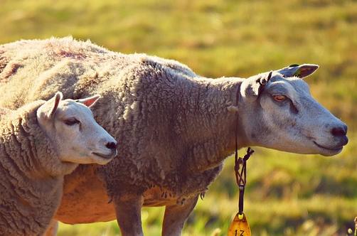 91年属羊男克妻吗,跟哪个生肖女不合适