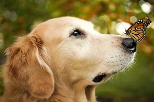 属狗人哪个月出生是富豪命,三月、七月、十月
