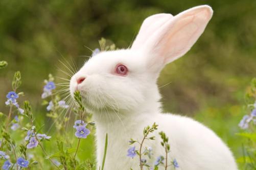 几月出生的兔是苦命兔,一生运势如何