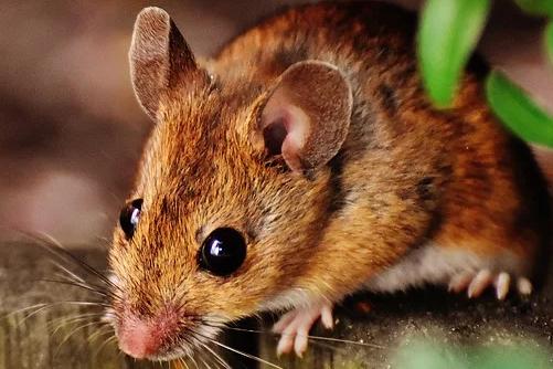 2020年属鼠的人怎么过,有什么需要注意的地方