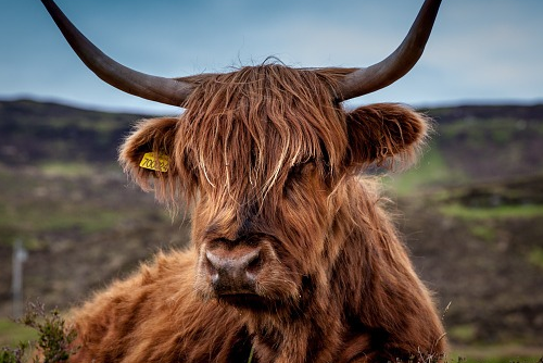 最旺牛的是什么生肖,生肖鼠、马、猪