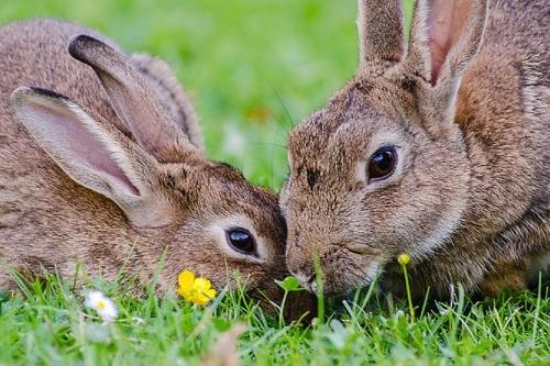 最旺兔的是什么生肖,生肖马、龙、猴、牛