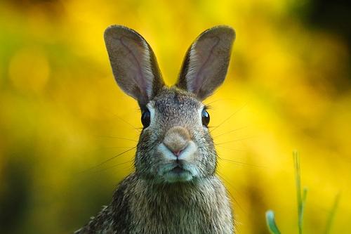 63年兔的退休时间是哪年,退休前运势如何