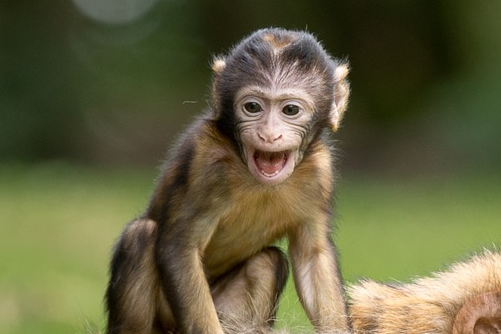 40岁的80年属猴人需注意什么,不要骄傲自满