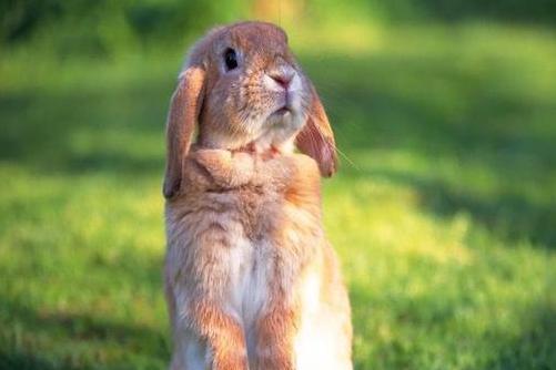 63年的兔什么时候退休,晚年的运势如何