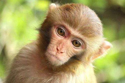 80年属猴人的命中三大坎,表现在哪些方面