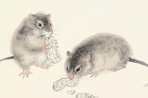1972年出生属鼠人今年幸运色是什么2021
