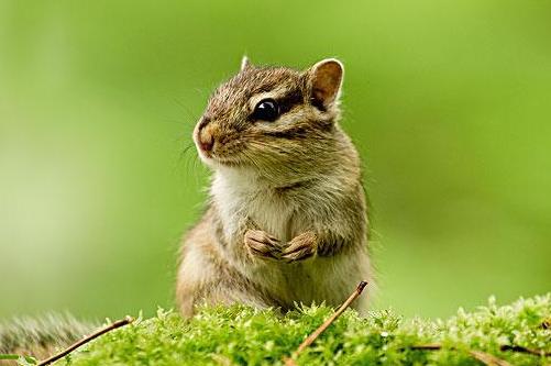 1960年出生属鼠人今年幸运色是什么2021