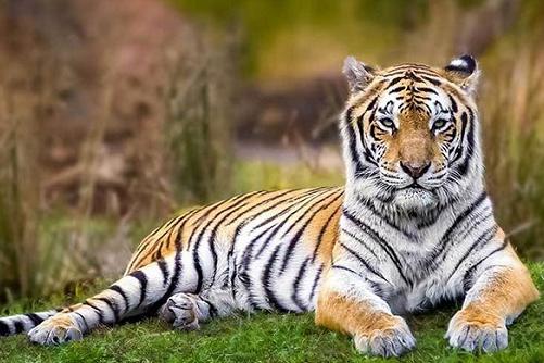 1986年出生属虎人今年幸运色是什么2021