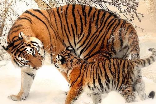 2010年出生属虎人今年幸运色是什么2021