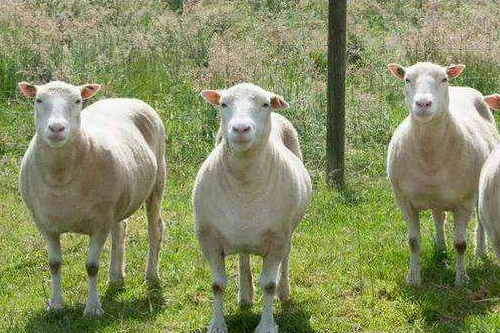 67年属羊能活多少岁,晚年运势