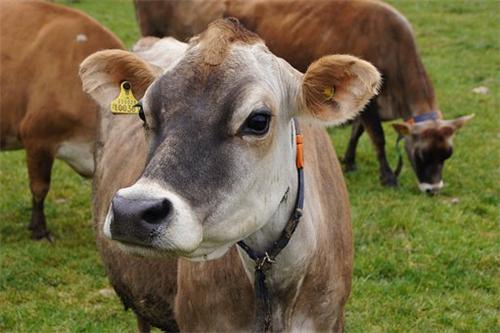 属牛的农历几月出生福运好2021年,二月、七月、九月