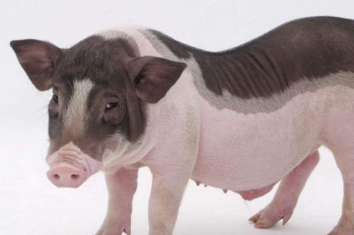 属猪人2021年3月份运势查询