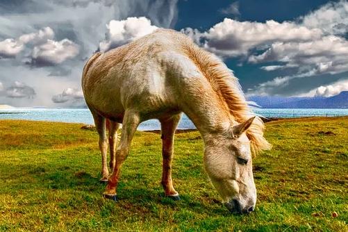 属马的人家里可以挂八骏图吗,八骏图悬挂的讲究