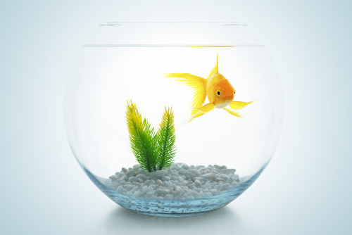 鱼缸放办公桌哪边好,鱼缸摆放的讲究